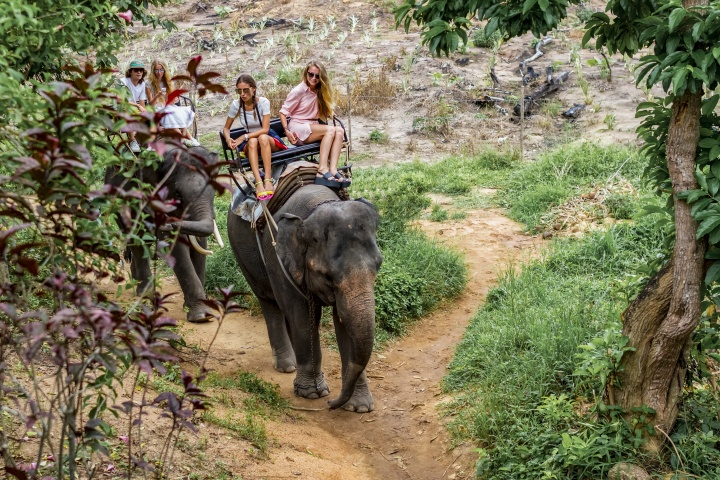 Get Off My Back – Issues with Elephant Trekking
