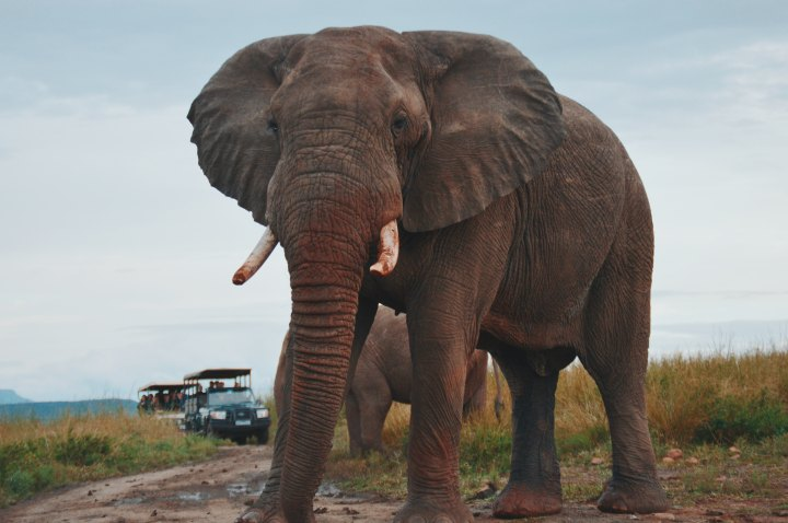 What the Botswana Elephant Killings tell us About our Relationship with Wildlife