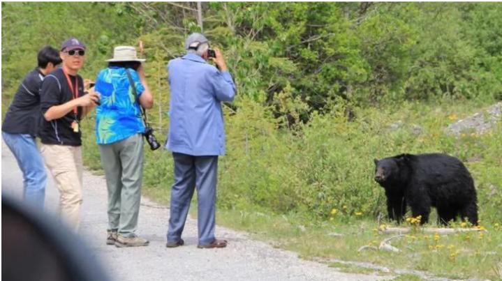 tourists - bears
